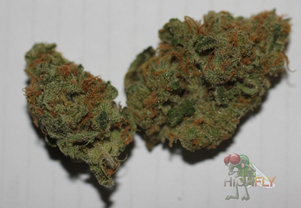 Marihuana Amnesia Haze Blueten