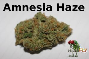 Amnesia Haze Blüte